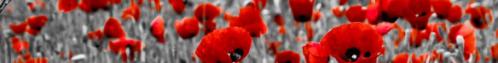 poppy-banner